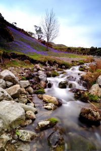 Beautiful-bluebell-walks-200x300