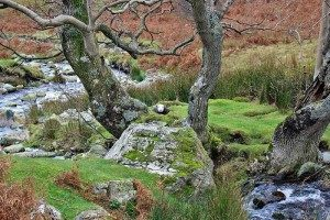 Rannerdale trip from Cottages Made For Two.