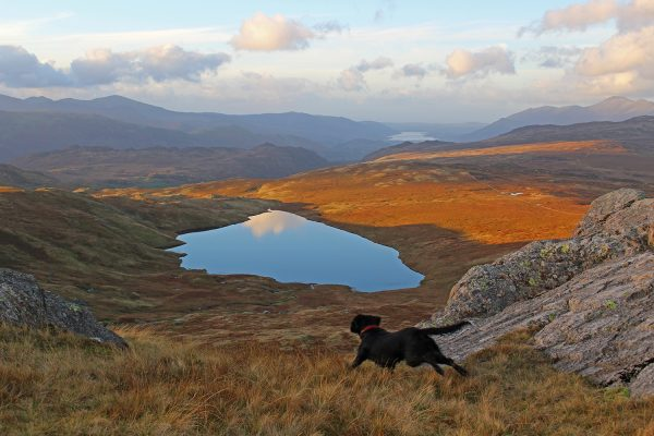 Lake District Dog Friendly Cottages Gallery of Dogs