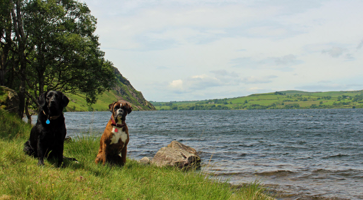 Dog Friendly Lake District Cottages Bring Your Dog For Free