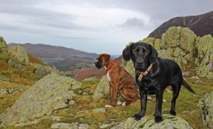 Dasher and Binsey staying at our Dog Friendly Cottages